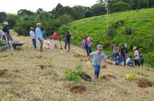 Voluntários plantam 600 mudas para ajudar na recuperação de nascente em Jaru, RO