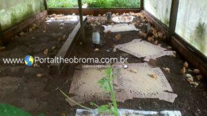 Moradora da zona rural de Jaru tem granja invadida e mais de 100 pintinhos mortos pisoteados pelo invasor